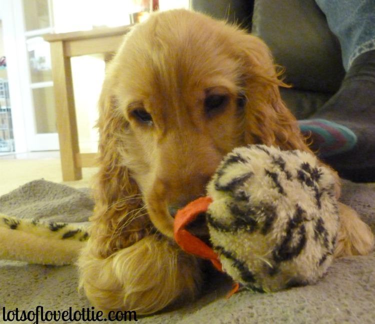 Lots of Love Lottie Blog Hugo2