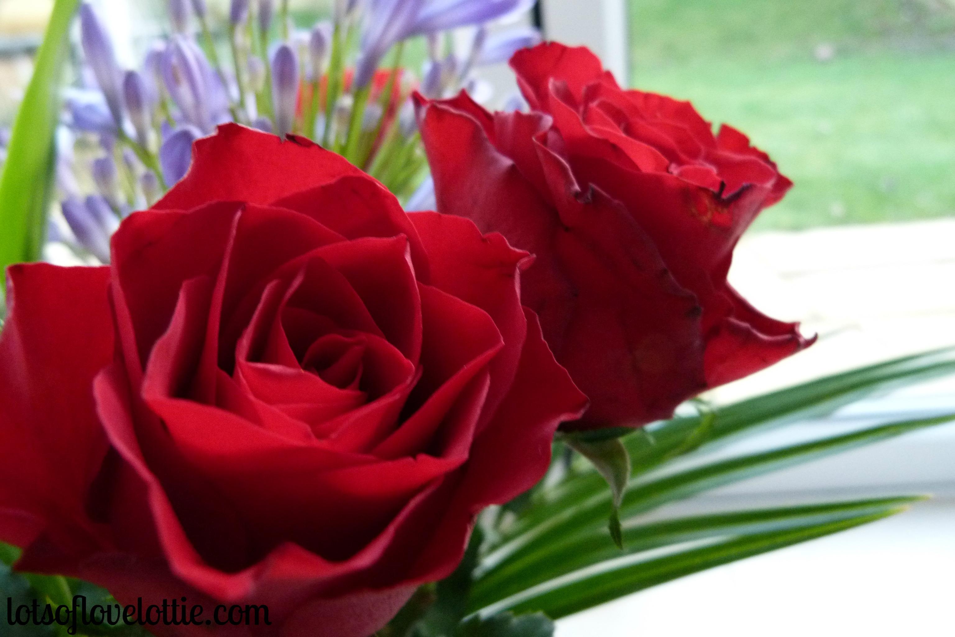 Lotties life beautiful flowers and new trainers lots of love lottie blog lotties life week 7 3 izmirmasajfo