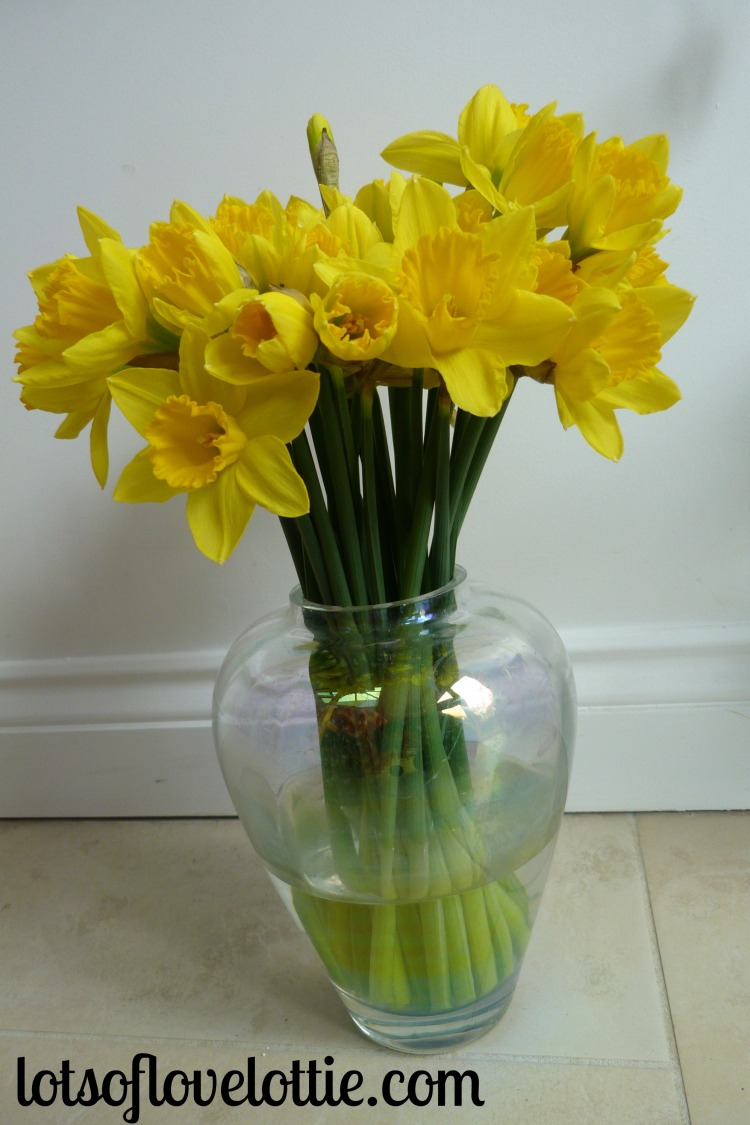 Lots of Love Lottie Blog Feb Favs Daffodils 1