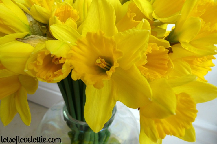 Lots of Love Lottie Blog Feb Favs Daffodils 2