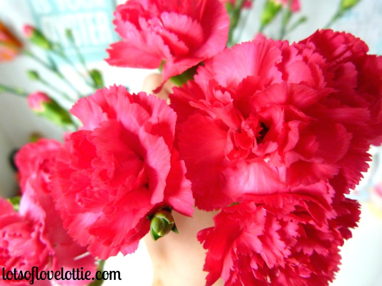 Lots of Love Lottie May Favs Carnations Closup